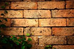 Folhas na parede de tijolo Fotografia de Stock