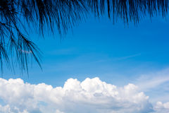 Folhas na parte dianteira do clound branco no céu azul Espaço no ce Imagem de Stock Royalty Free