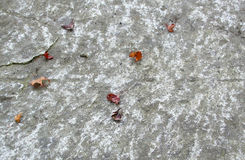 Folhas na pedra Fotografia de Stock