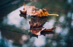 Folhas na poça fotografia de stock