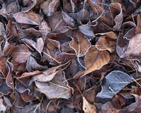 Folhas na queda Foto de Stock