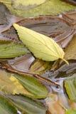 Folhas na queda imagem de stock