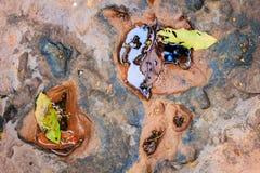 Folhas na rocha Imagens de Stock Royalty Free