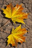 Folhas na terra árida fotos de stock royalty free
