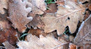 Folhas na terra imagem de stock