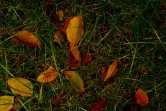 Folhas na terra imagens de stock royalty free