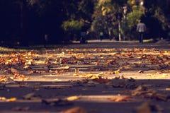 Folhas na terra Foto de Stock Royalty Free