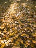 Folhas na terra Fotos de Stock