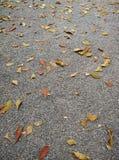 Folhas na terra de pedra Imagem de Stock Royalty Free