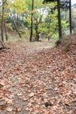 Folhas na terra no conceito do outono da floresta fotos de stock royalty free
