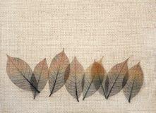 Folhas na textura da lona fotos de stock