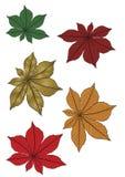 Folhas nas cores Imagens de Stock