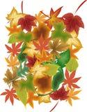 Folhas nas cores do outono ilustração do vetor