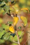 Folhas nas filiais na floresta do outono. Imagens de Stock Royalty Free