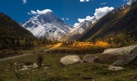 Folhas nevado da montanha no ambiente denso fotos de stock