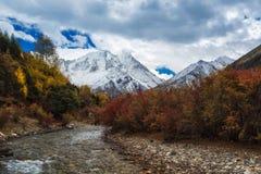 Folhas nevado da montanha no ambiente denso fotos de stock royalty free