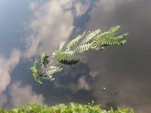 Folhas no céu Imagens de Stock