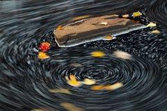 Folhas no ciclo da água Imagens de Stock Royalty Free