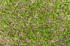 Folhas no gramado fotos de stock royalty free