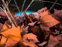 Folhas no inverno imagem de stock