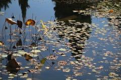 Folhas no lago Fotografia de Stock