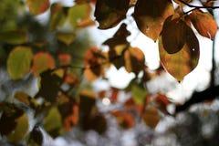 Folhas no outono Foto de Stock Royalty Free