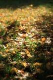 Folhas no outono Imagem de Stock