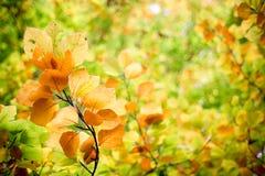 Folhas no outono Imagens de Stock