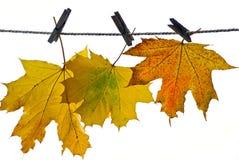 Folhas no outono, Imagens de Stock Royalty Free