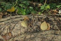 Folhas no outono Fotografia de Stock