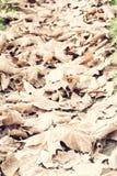 Folhas no outono Imagem de Stock Royalty Free