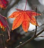 Folhas no outono no jardim Fotos de Stock Royalty Free