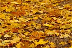Folhas no parque em outubro imagens de stock royalty free