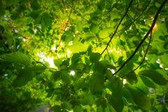 Folhas no parque público foto de stock