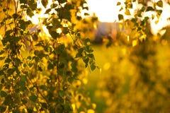 Folhas no por do sol Imagens de Stock