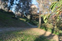 Folhas no primeiro plano com fundo da grama e das árvores fora de foco fotos de stock