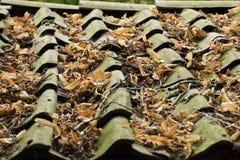 Folhas no telhado Foto de Stock Royalty Free