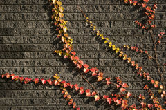 Folhas nos tijolos 5 Foto de Stock Royalty Free
