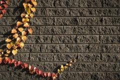 Folhas nos tijolos 4 Imagem de Stock Royalty Free