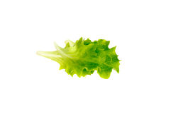 Folhas novas da salada Imagens de Stock Royalty Free