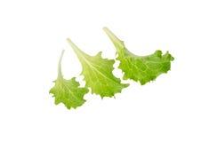 Folhas novas da salada Fotografia de Stock