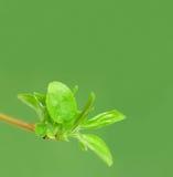 Folhas novas verdes imagem de stock