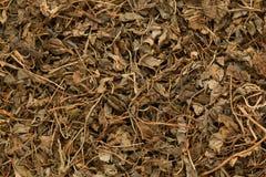 Folhas orgânicas de Kasoori Methi (Trigonella Foenum Graecum) Imagem de Stock Royalty Free