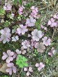 Folhas ou flores imagens de stock royalty free