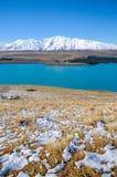 Folhas ou plantas na neve branca da montanha no inverno, lugares do paraíso em Nova Zelândia Imagens de Stock