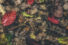 Folhas outonais imagem de stock