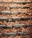 Folhas outonais em escadas Fotografia de Stock