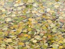 Folhas outonais na água Foto de Stock Royalty Free