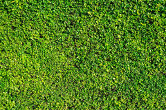 Folhas para o fundo no jardim Fotografia de Stock Royalty Free