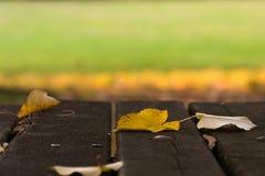 Folhas, parque, queda adiantada Foto de Stock Royalty Free